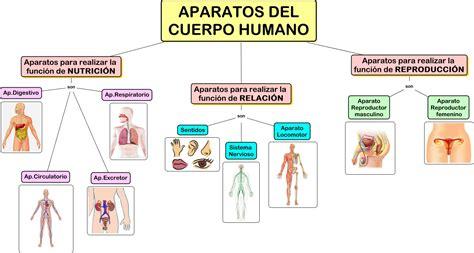 1 los aparatos cuerpo humano