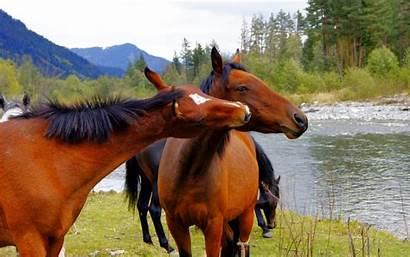 Horses Horse Wallpapers Desktop Widescreen Wallpepers Action