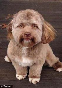 Dog with very human face goes viral on Twitter | Daily ...