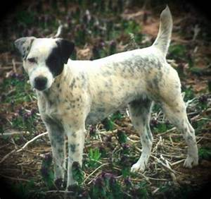 Jack Russell Faqs Page   Auto Design Tech