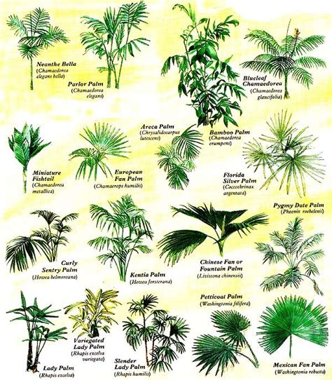 types of plants 25 best ideas about palm tree types on pinterest palm