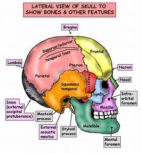 Pin By Lpn Universe On Anatomy In Nursing