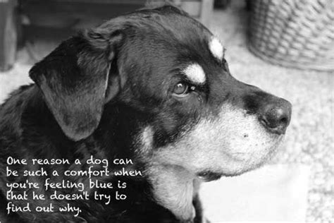 dog image quotes  sayings page