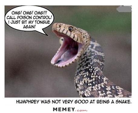 Snake Memes - snake memes funny snake pictures memey com