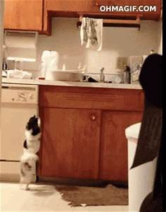 Dog Dancing GIF - Find & Share on GIPHY
