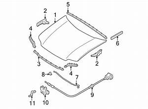 Ford Escape Hood Hinge  Left  Front  Components  Body