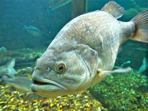 aquarium du val de loire sunnycompany