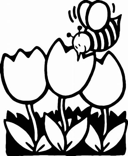 Clip Summer Clipart Coloring Drawing Activities Flowers
