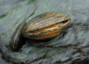 Opinions on Mollusca