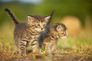 Katzen Fernhalten Von Möbeln : was die katze mit miau meint forschung spezial wissenschaft ~ Sanjose-hotels-ca.com Haus und Dekorationen
