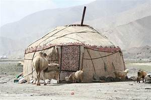 Camel and goats in front of a traditional yurt near Lake ...