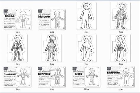 sistemas cuerpo humano para recortar y colorear
