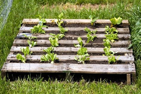 Ideas Using Pallets by 25 Ways Of How To Use Pallets In Your Garden