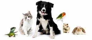 pet sitters39 levam cuidado para animais ate casa do cliente With babysitter dog sitter