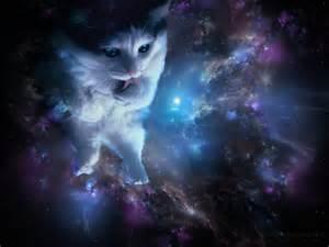 cat god strange cat behavior the secret lives of the cat gods