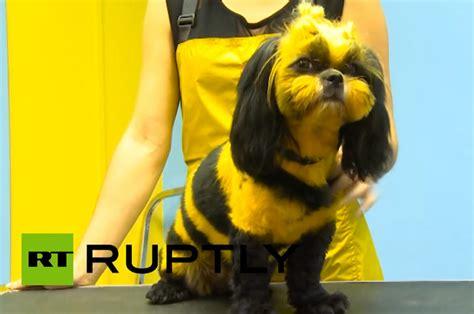 russian pet groomers create dragon cat bee dog geekologie