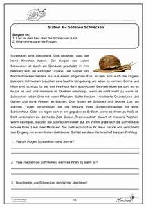Was Fressen Schnecken Mit Haus : die schnecke lernbiene verlag ~ Lizthompson.info Haus und Dekorationen