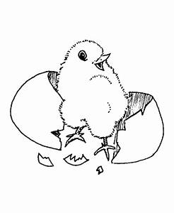 Coloring pages mega blog: Baby chicken cute animal ...