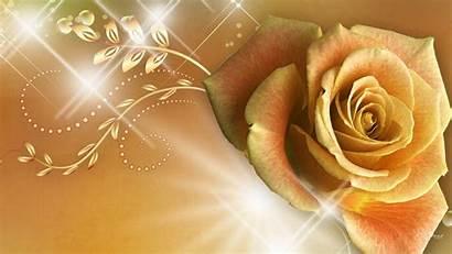 Rose Gold Wallpapers Golden Yellow Flower Desktop