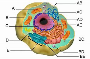High quality images for plant cell diagram lysosome mobile53dandroid hd wallpapers plant cell diagram lysosome ccuart Images