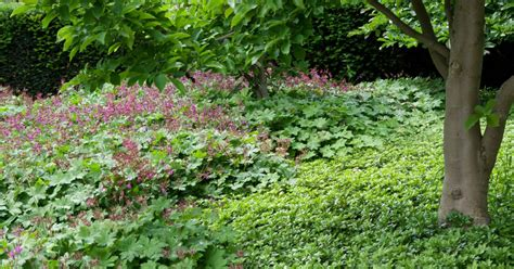 Bodendecker Für Lehmboden by Bodendecker Gegen Unkraut Mein Sch 246 Ner Garten