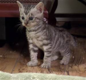 Cute of the Day: Baby Tabby Kittens - The World of Nardio