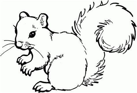 preschool squirrel coloring page coloring home