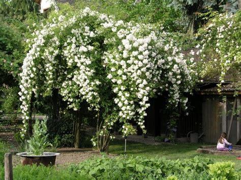 Pflegetipps Für Traumhaften Garten