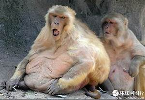 World's fattest animals - China.org.cn