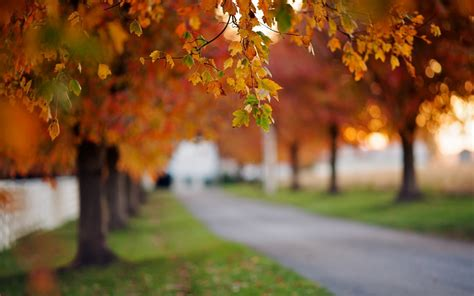nature close  leaves autumn trees path grass green
