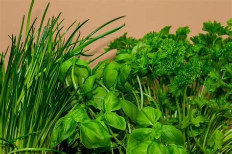 Pflanzen Für Die Küche by Die 10 Wichtigsten Kr 228 Uter F 252 R Die K 252 Che Food Blaster