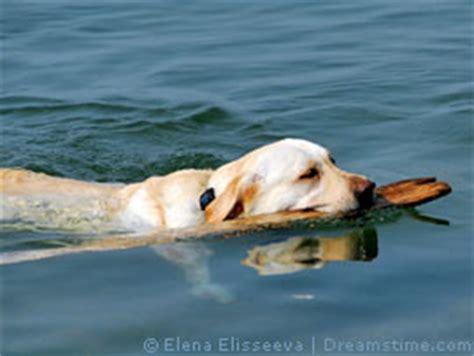 Urlaub Hund Lago Maggiore Ferienh 228 User Ferienwohnungen