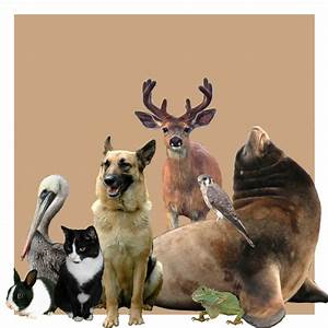 Group Of Animals Together