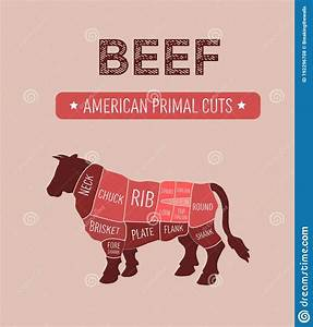 Beef Meat Cuts Scheme Vector Illustration
