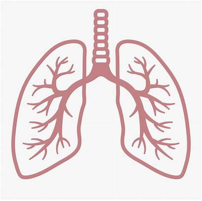 Respiratory Clipart Breathing Lungs Rate Lung Clip
