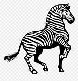 Clipart Pinclipart Zebra Clip Zebras Startling Coloring sketch template