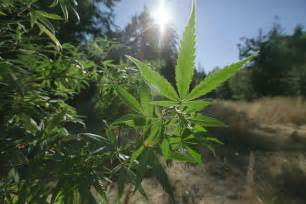 Legal Marijuana California 2016