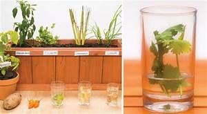 Pflanzen Zu Hause : 5 pflanzen die ihr einfach zu hause aus lebensmittelresten z chten k nnt ~ Markanthonyermac.com Haus und Dekorationen