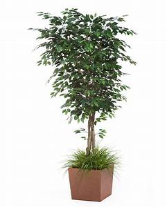 6' Trim Artificial Silk Ficus Tree for Narrow Spaces at