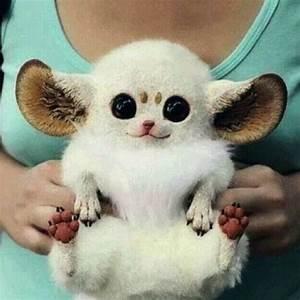 weird animals | Fav animals | Pinterest | Search and Animals