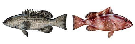 grouper vs better ftempo nutrition