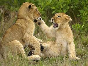 Top Flight Nature Photography: Photographing African ...