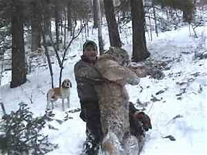 Bear Creek Adventures, hunting mountain lions in New Mexico.