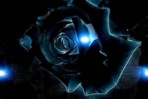Image Gallery neon flowers black