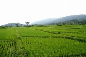 Rice Fields HD Landscape Wallpapers | Desktop Wallpapers