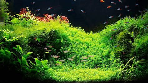 setting up a fish tank with live plants aquarium care