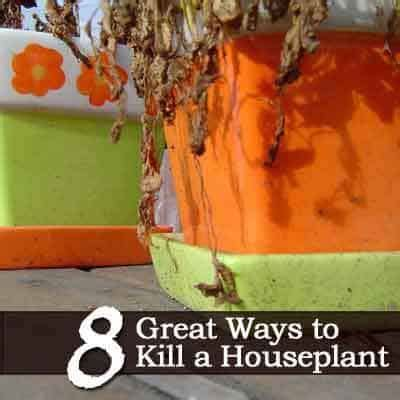 8 Great Ways To Kill A Houseplant