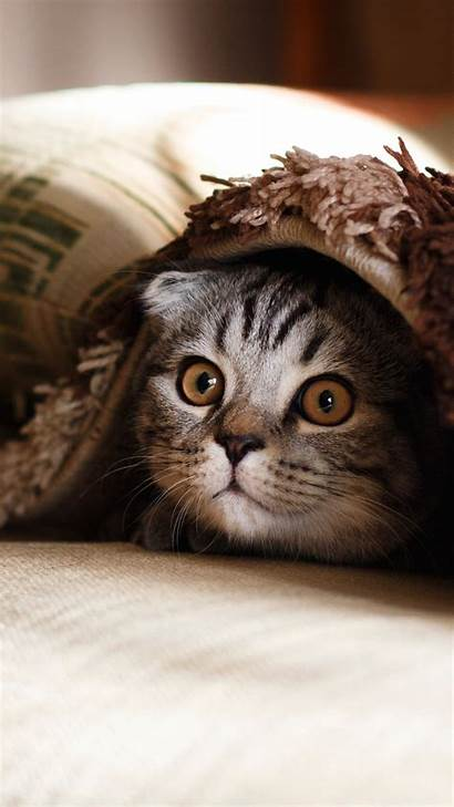 4k Cat Funny Animals Wallpapers Pets