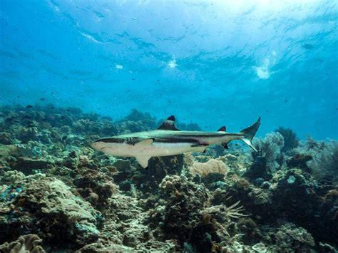 Raja At Dive - raja at scuba diving top dive liveaboards