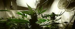 Indoor Grow Anleitung : anleitung f r den cannabisanbau unter k nstlicher beleuchtung rqs blog ~ Eleganceandgraceweddings.com Haus und Dekorationen
